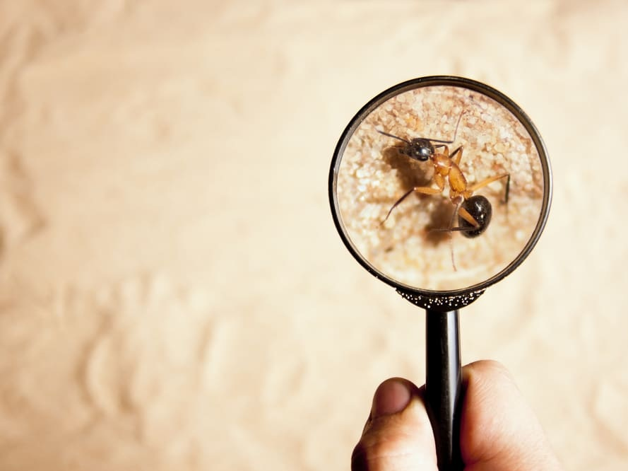 Pest Inspections When Selling Your Home