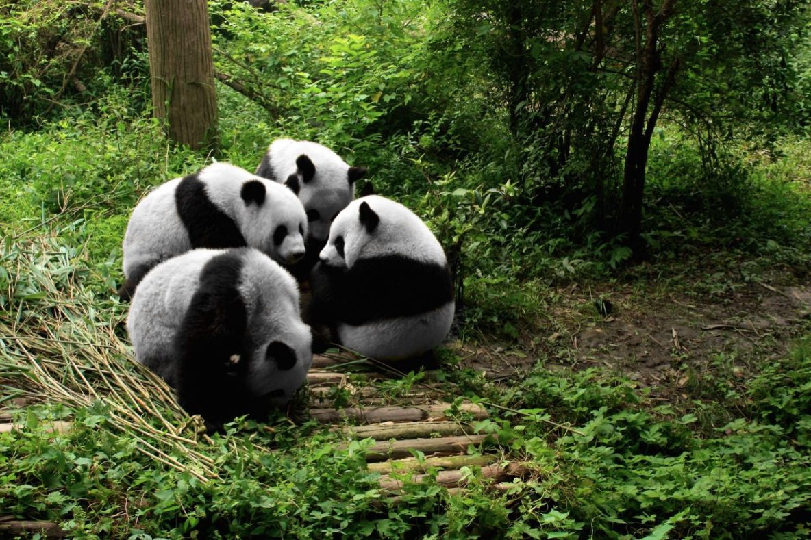 Chengdu4.jpg