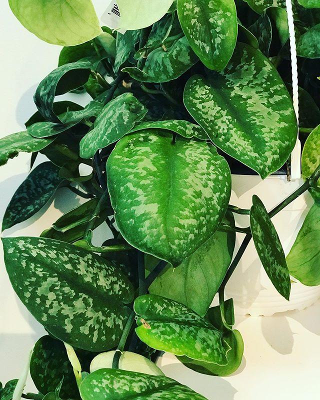 #huge #plant shipment in today!!! #pickaplant #pickapot #wellmakeitpretty #seattle #seattleflorist #flowers #plants #ceramics