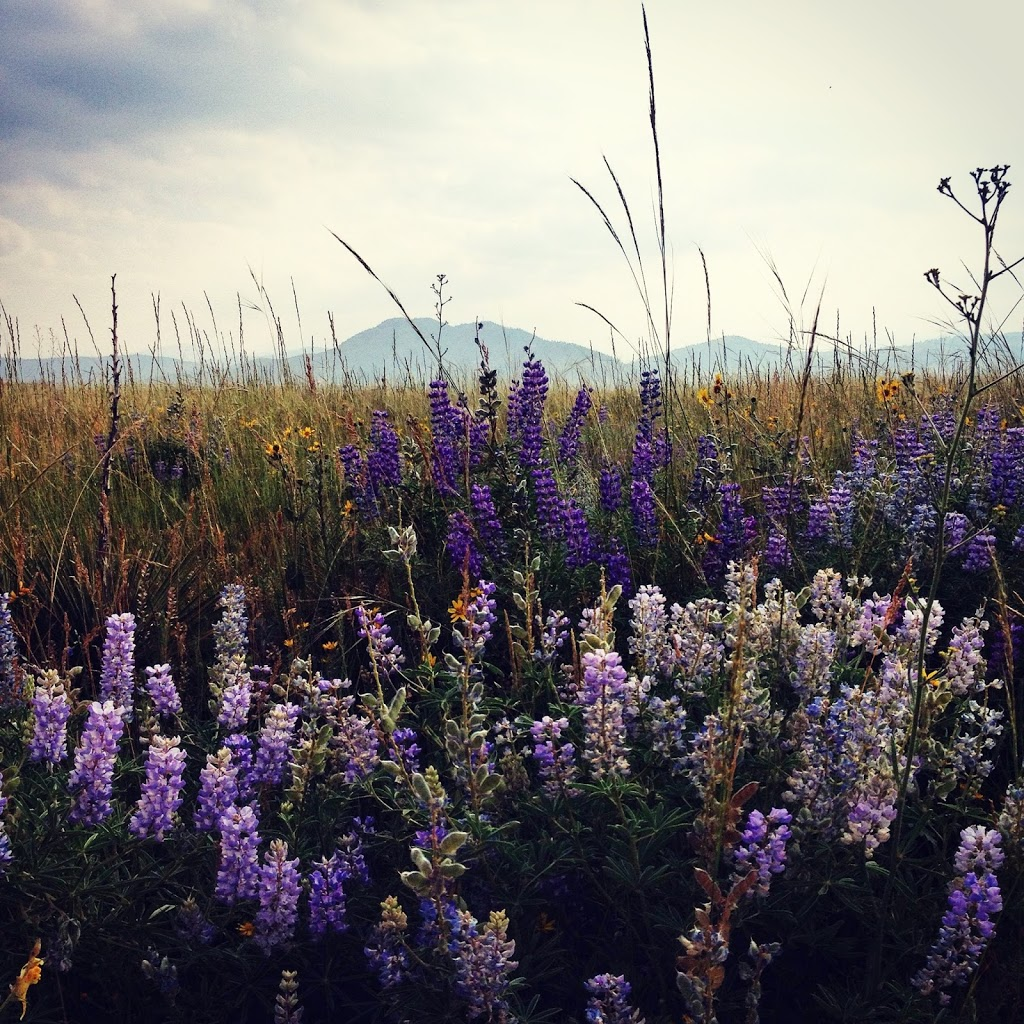 running uphill - Outdoor Women's Alliance