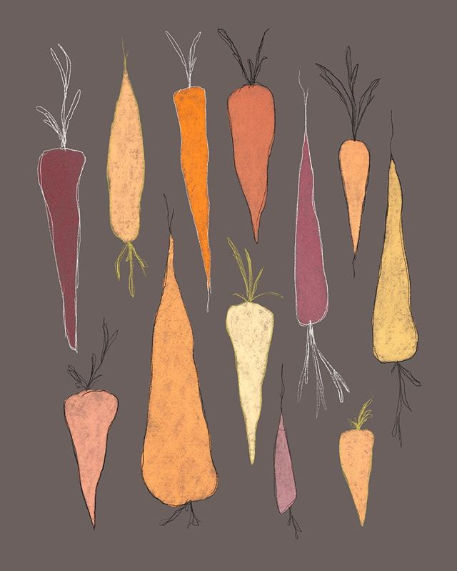 Carrot sketches 🥕 I've really been craving the root vegetables lately with all this cold weather. Hearty and healthy! Stay warm out there guys!