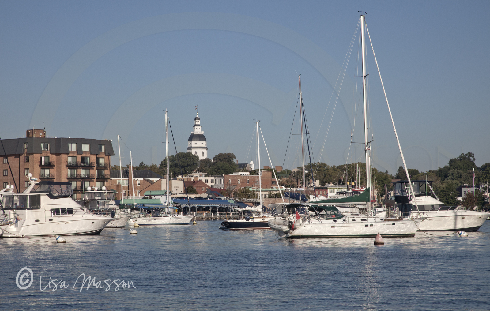Annapolis Harboe Morrongs 0738.jpg