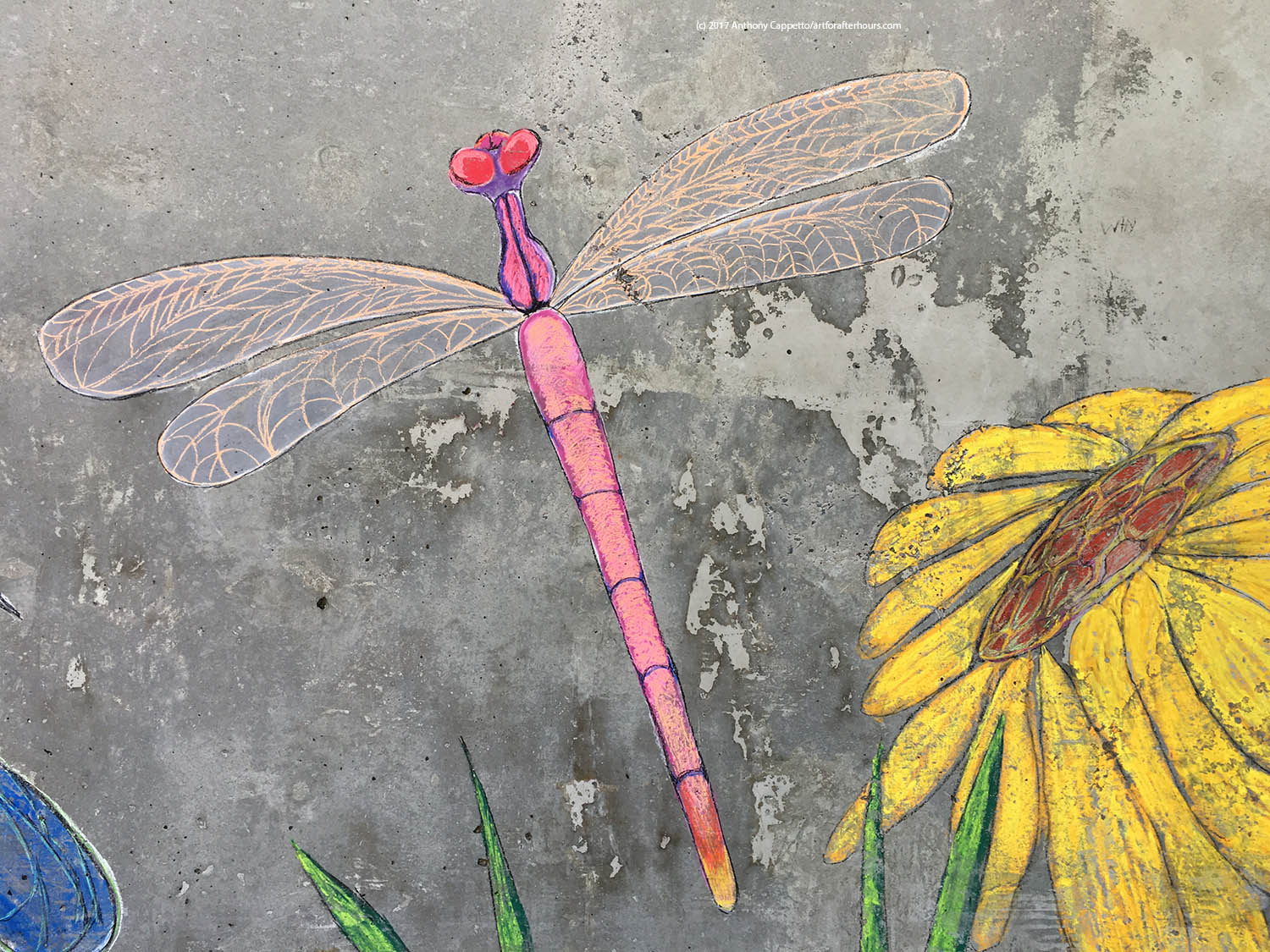 Pink dragon fly...