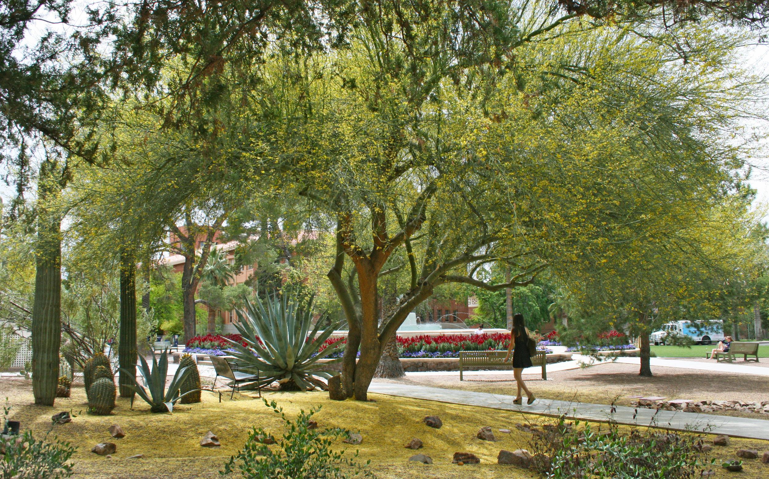 Palo Verde