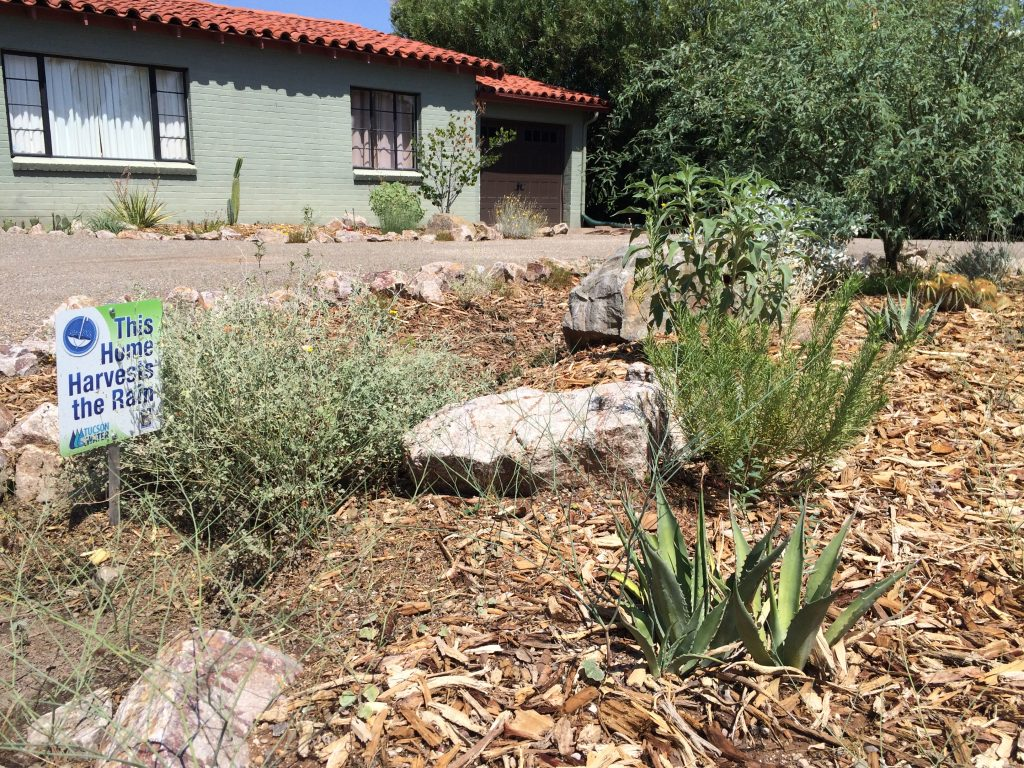 A homeowner's water harvesting basin, supported by the City of Tucson and Tucson Water.