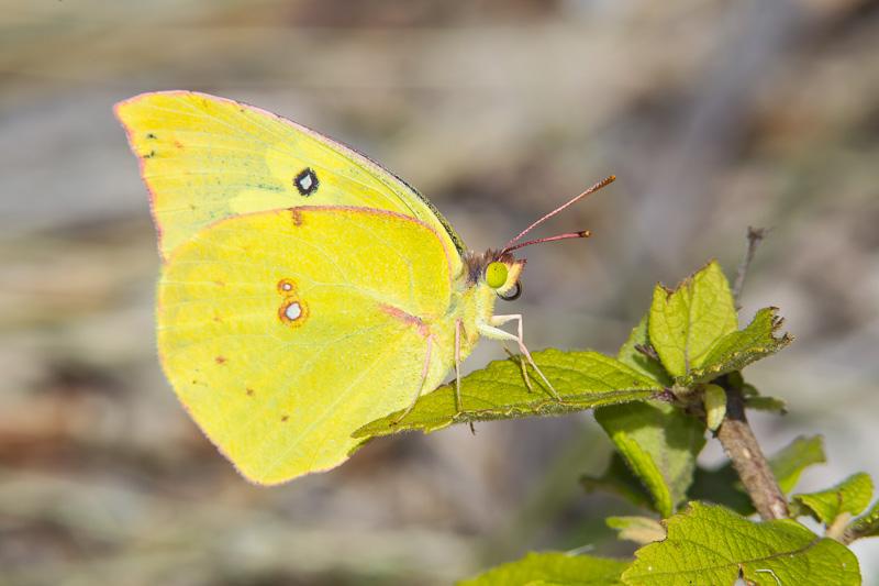 Source: Greg Lasley Nature Photography