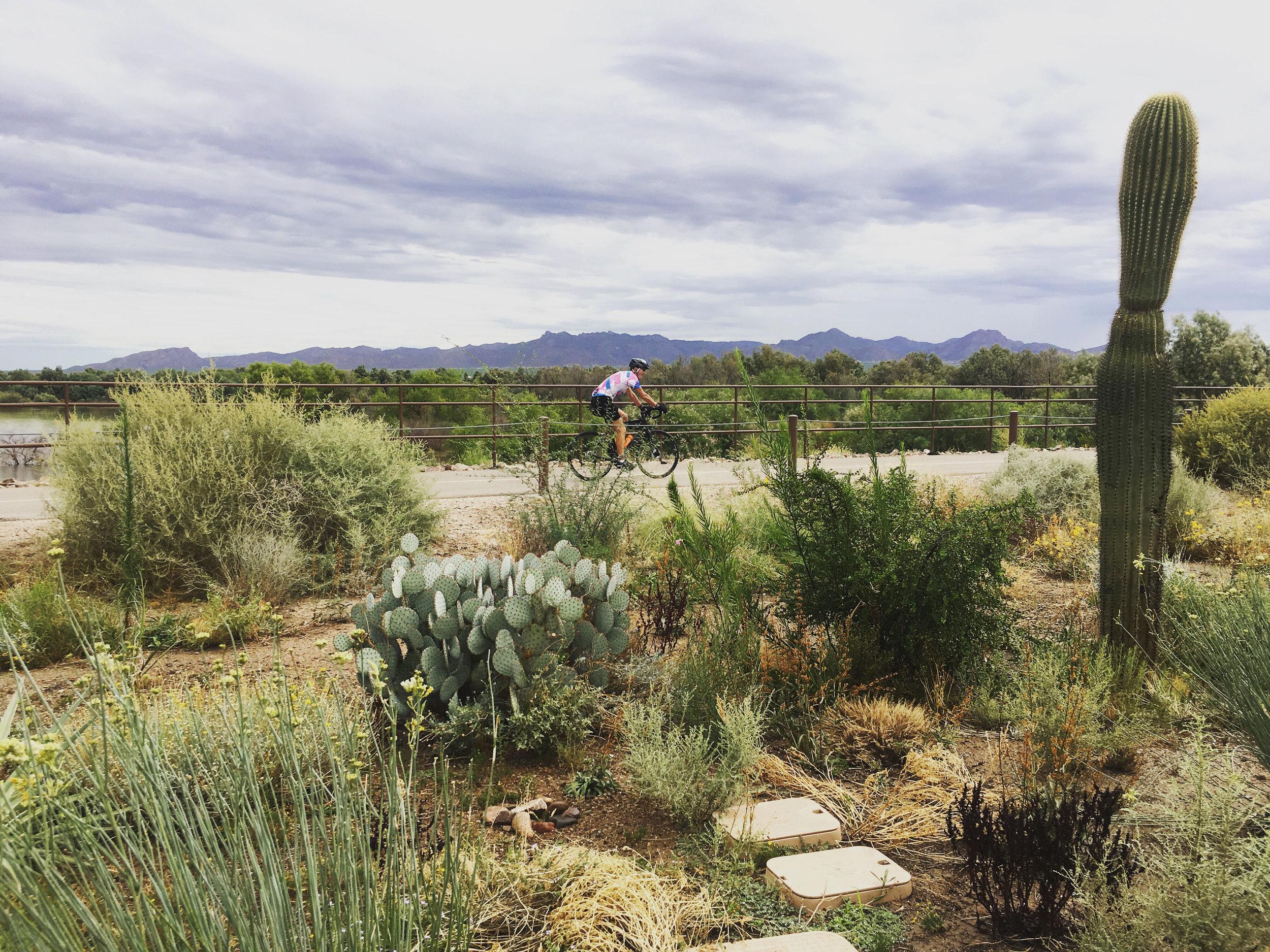 The Loop Trail passes right along El Rio Preserve.