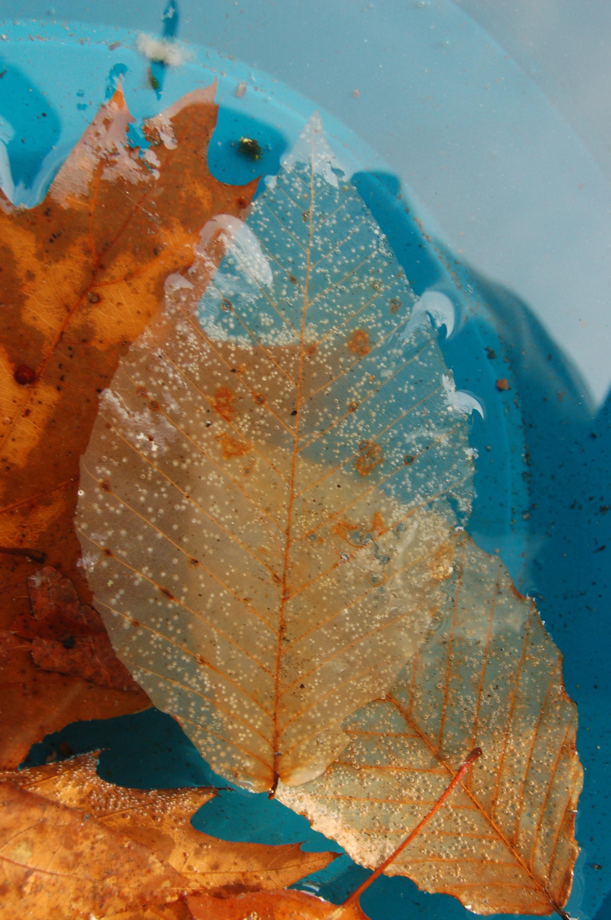 Leaves #1