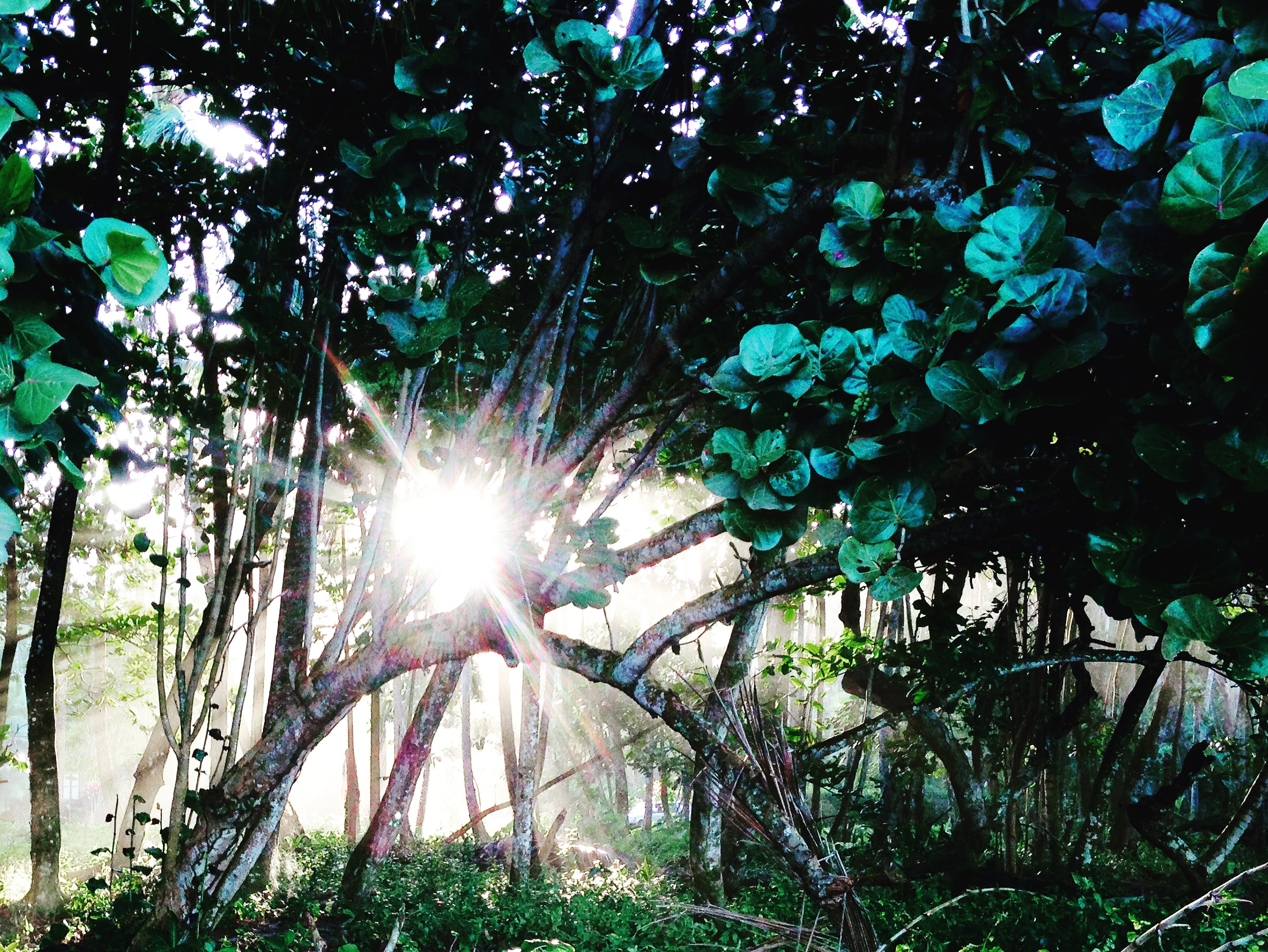 Tropical Woods