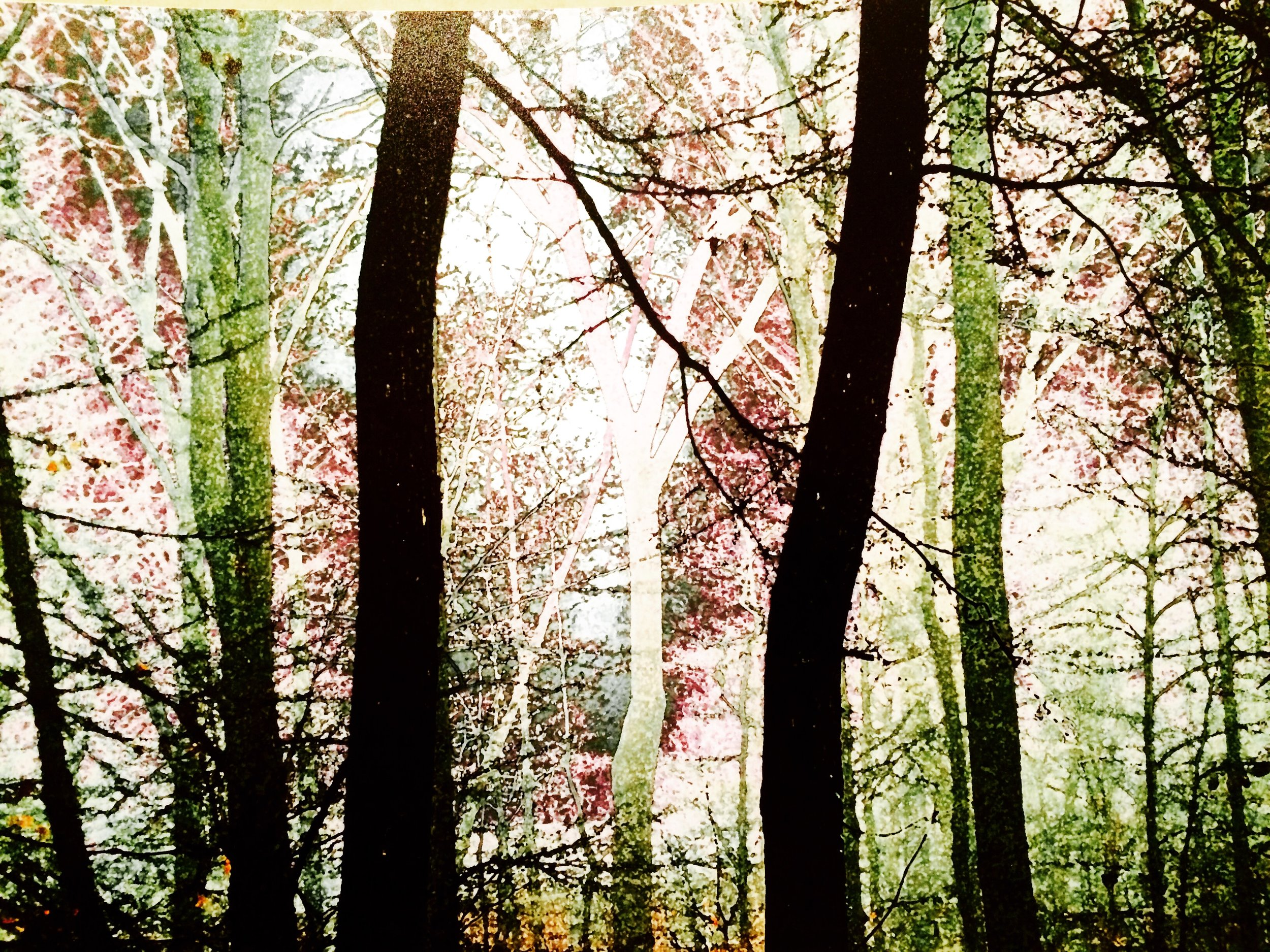 Painted Woods