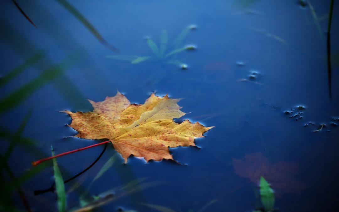 Water-1080x675.jpg