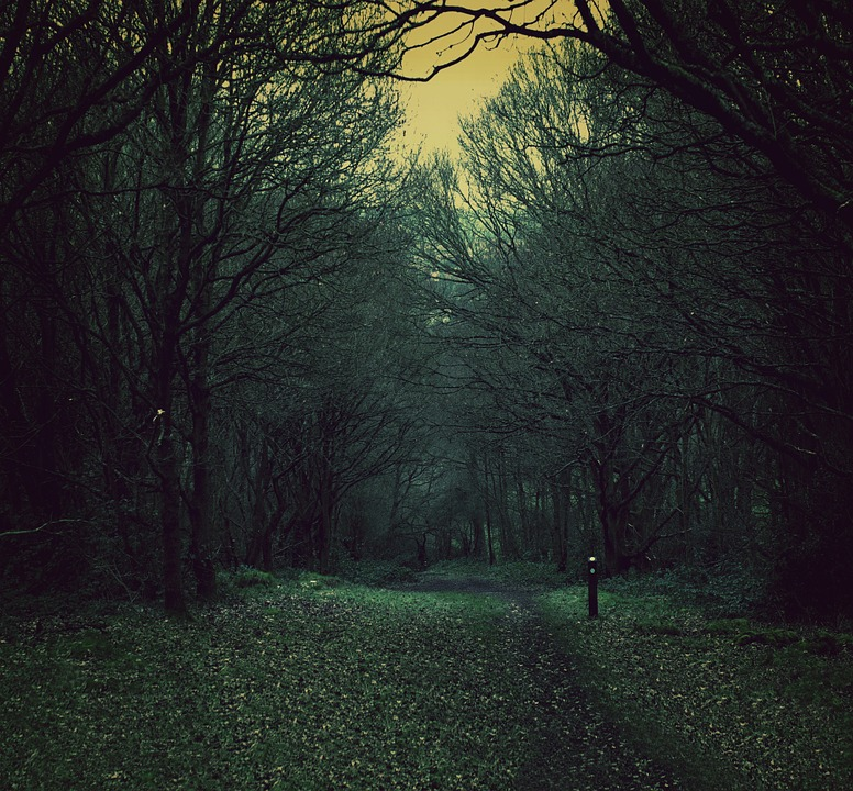 Dusk-Forest-Path-Dark-Nature-Spooky-Woods-450795.jpg