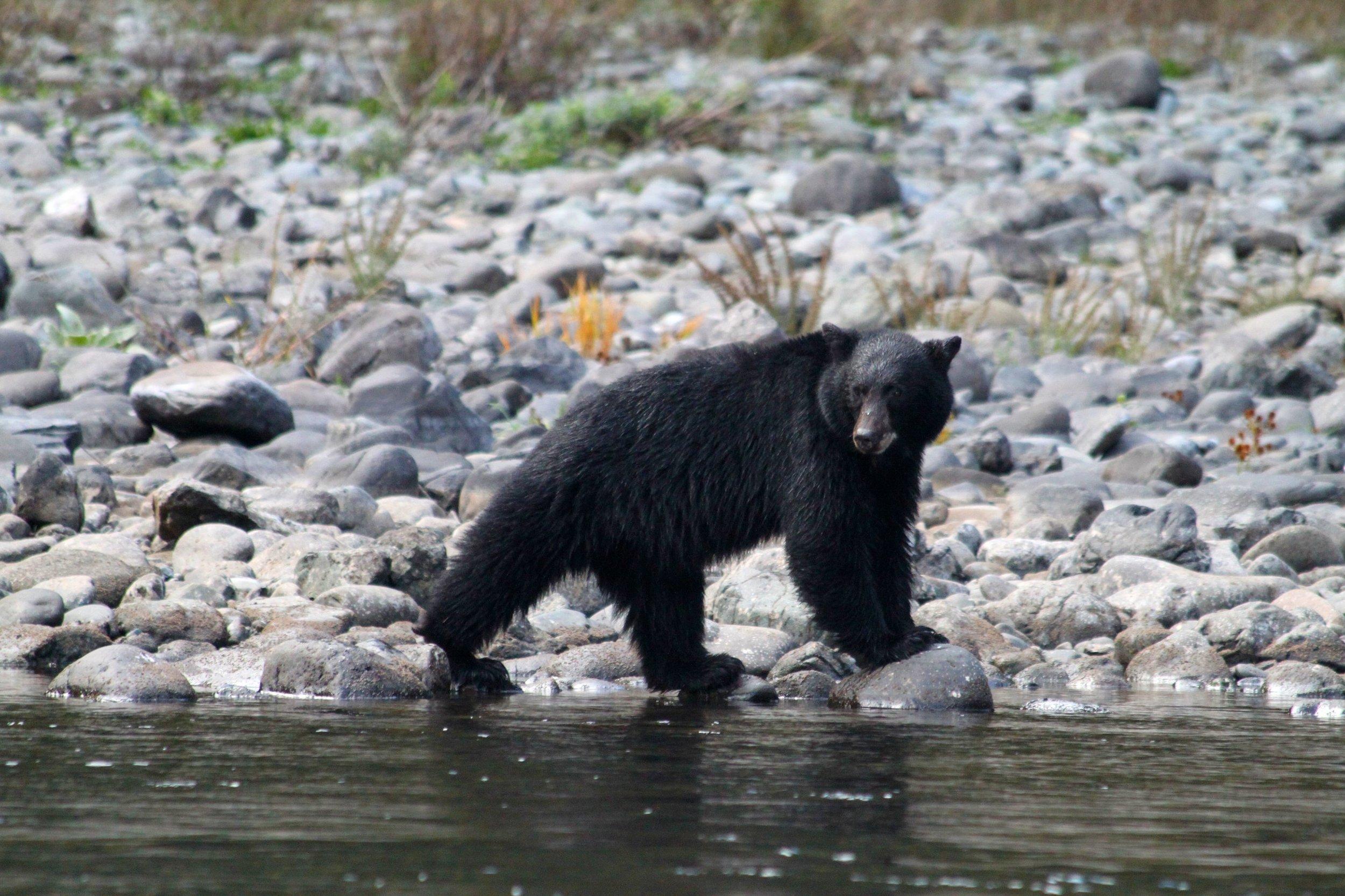 black-bear---rogue-river-rafting-trips---oregon_5375006718_o.jpg