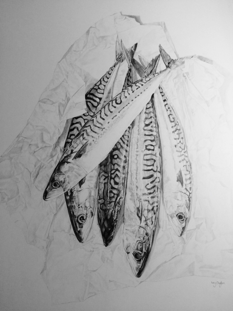 Mackerel-on-Paper-Pencil-Drawing-by-Lucy-Clayton-Kent-Artist-Fish-Art-.jpg