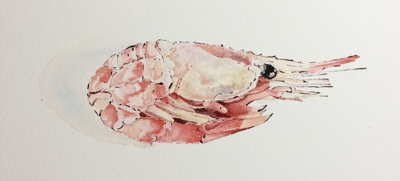 Pink-Prawn-Watercolou-+-Blotted-Line-Painting-Kent-Artist-Lucy-Clayton-Food-Illustration-.jpg