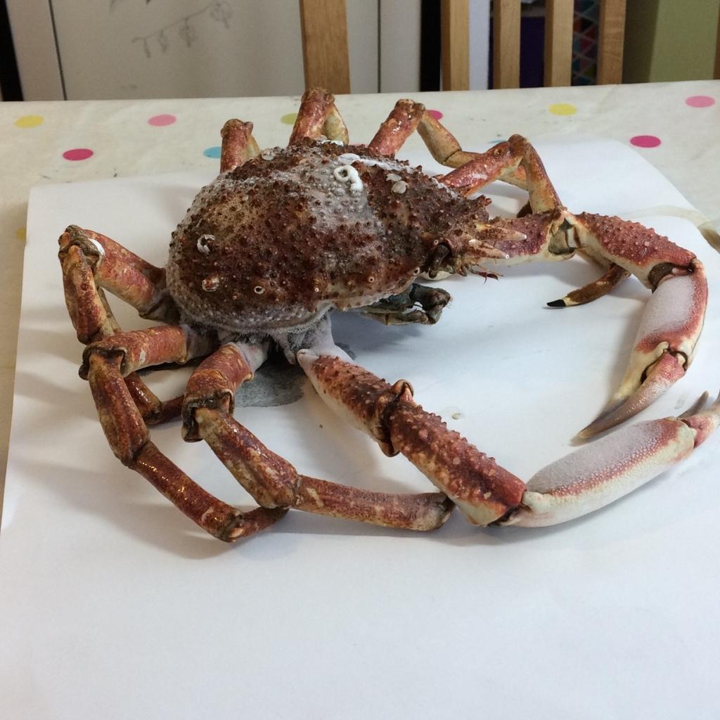 Defrosting Spider Crab