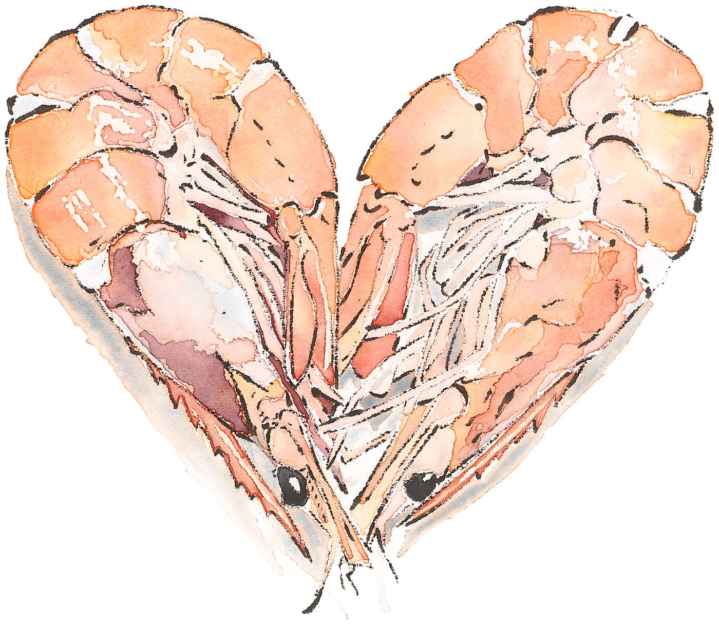 Prawn Heart - Watercolour & Blotted Line