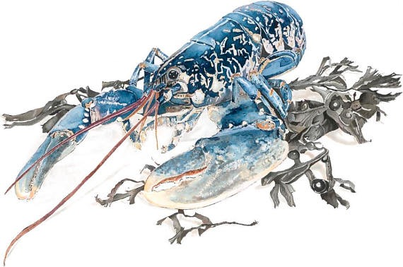 Native Lobster - Giclee print of an original watercolour and blotted line painting