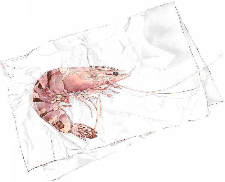 Tiger Prawn - watercolour and blotted line painting. Image size 42x51cm, Framed size 69x58cm approx
