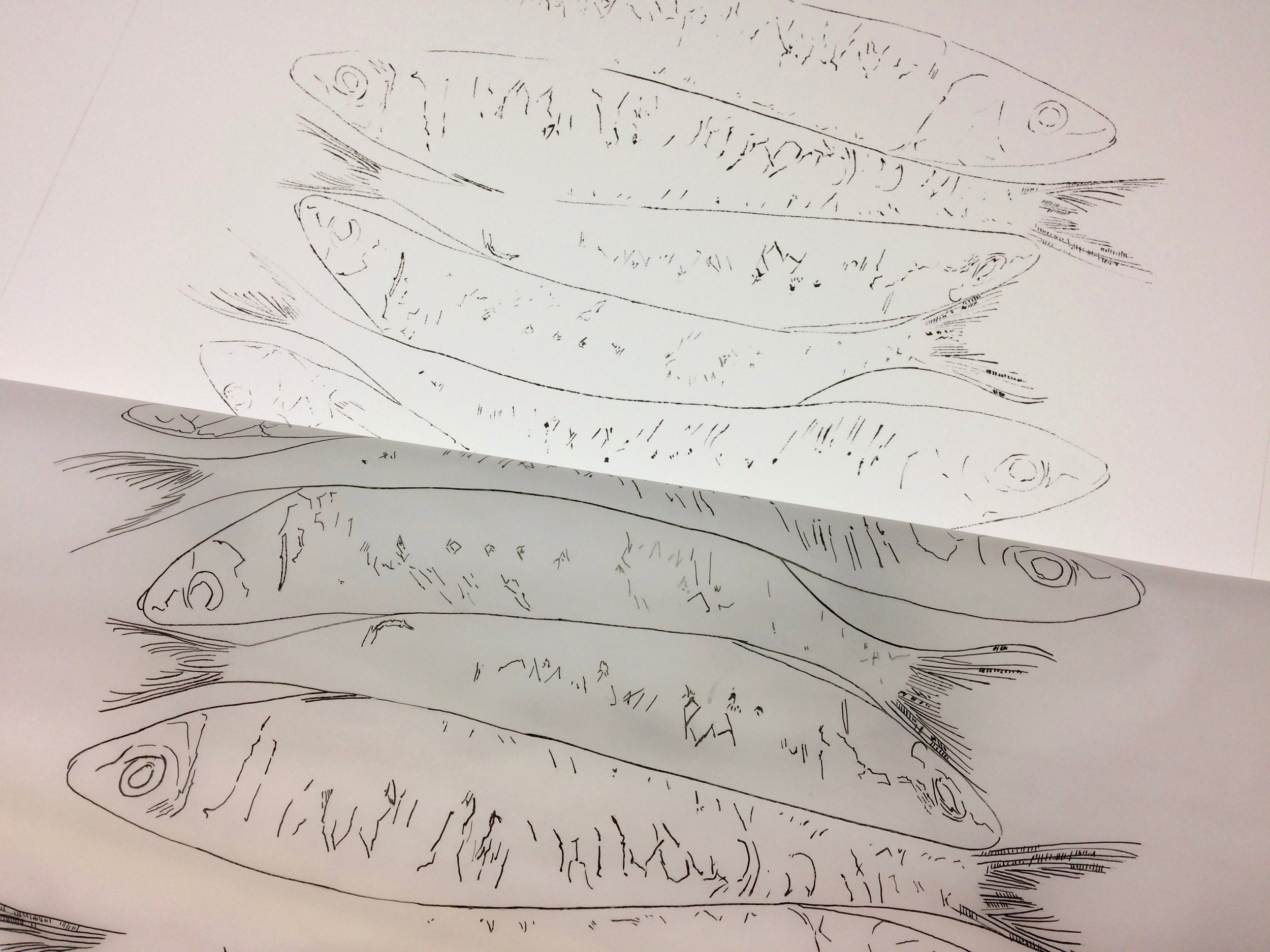 Printing sardines using the blotted line technique
