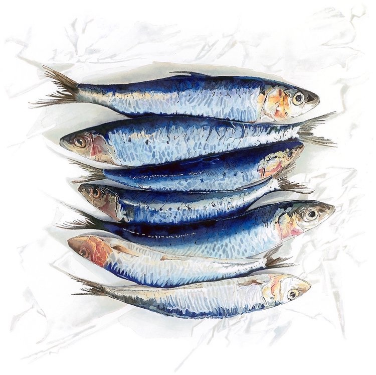 Top to Tail - watercolour and blotted line painting of Sardines by Lucy Clayton