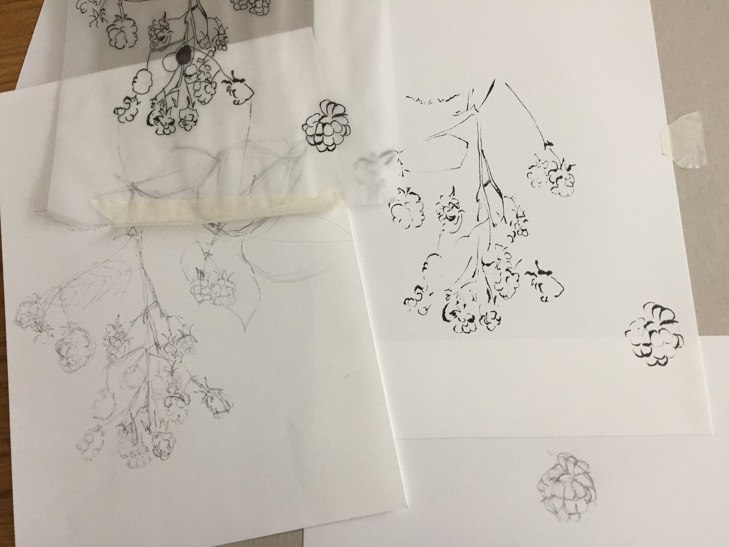 Experimenting with the blotted line technique and quick sketches of blackberries.