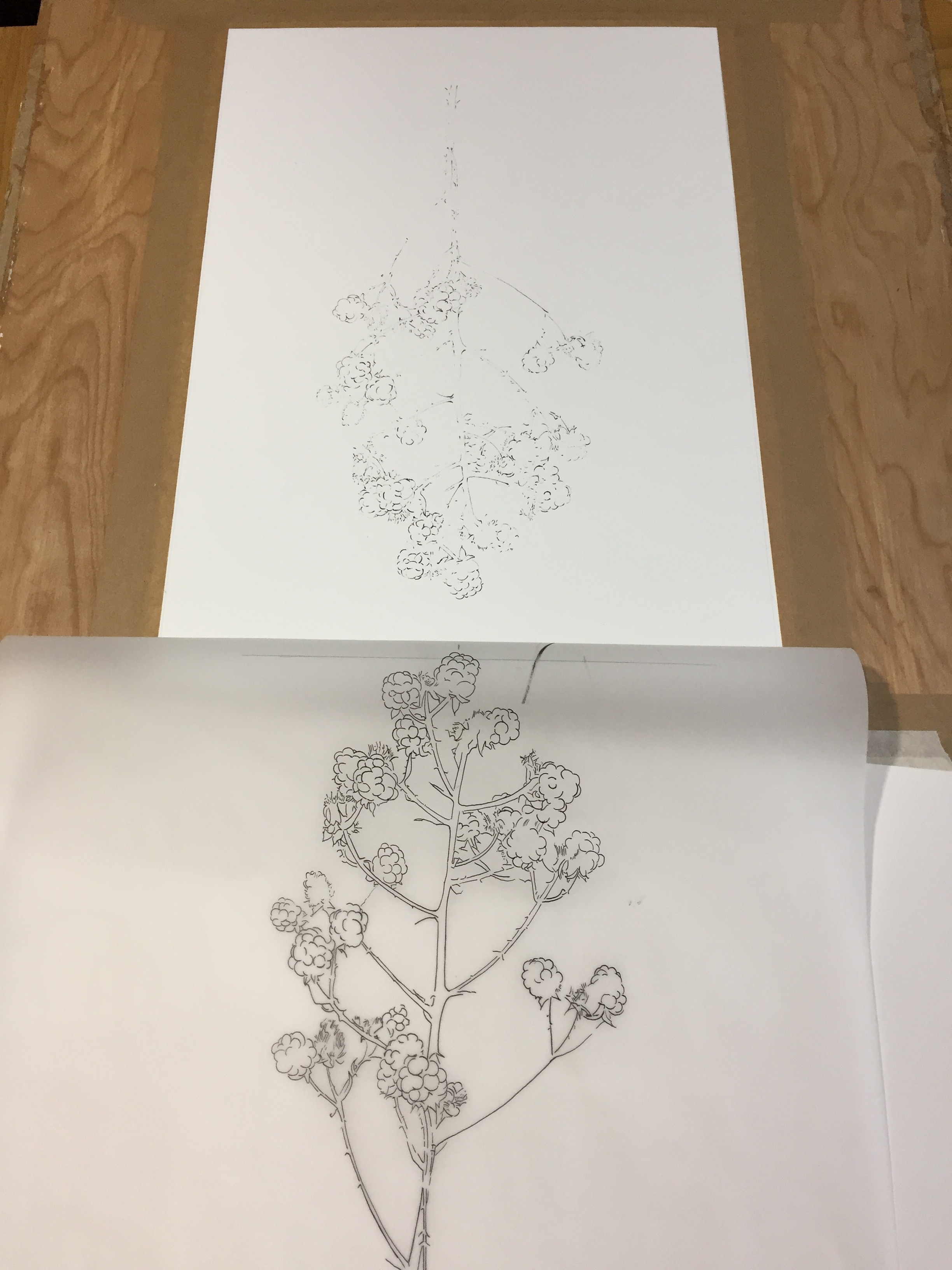 Printing with the blotted line technique