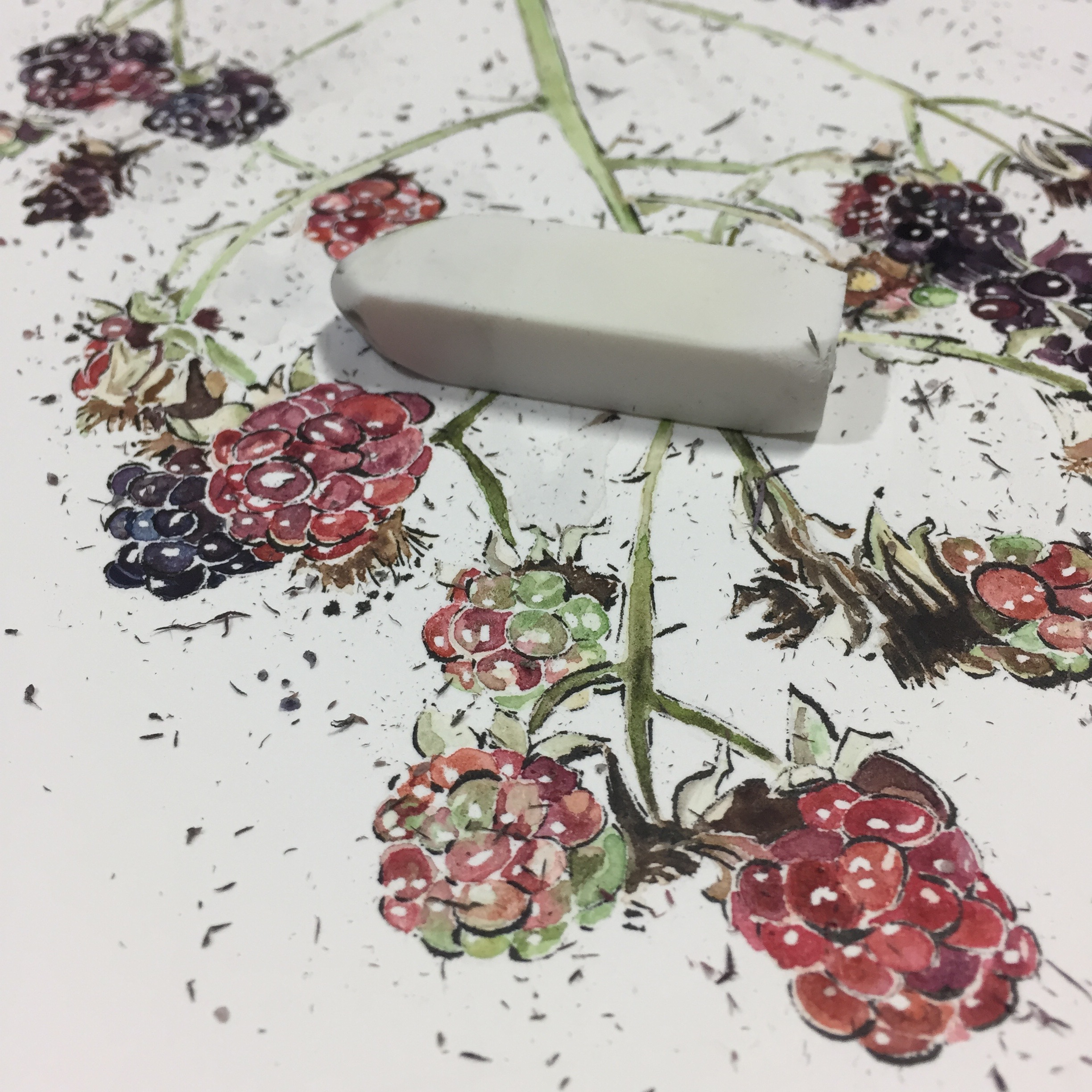 Removing masking fluid on Blackberries - work in progress by Lucy Clayton