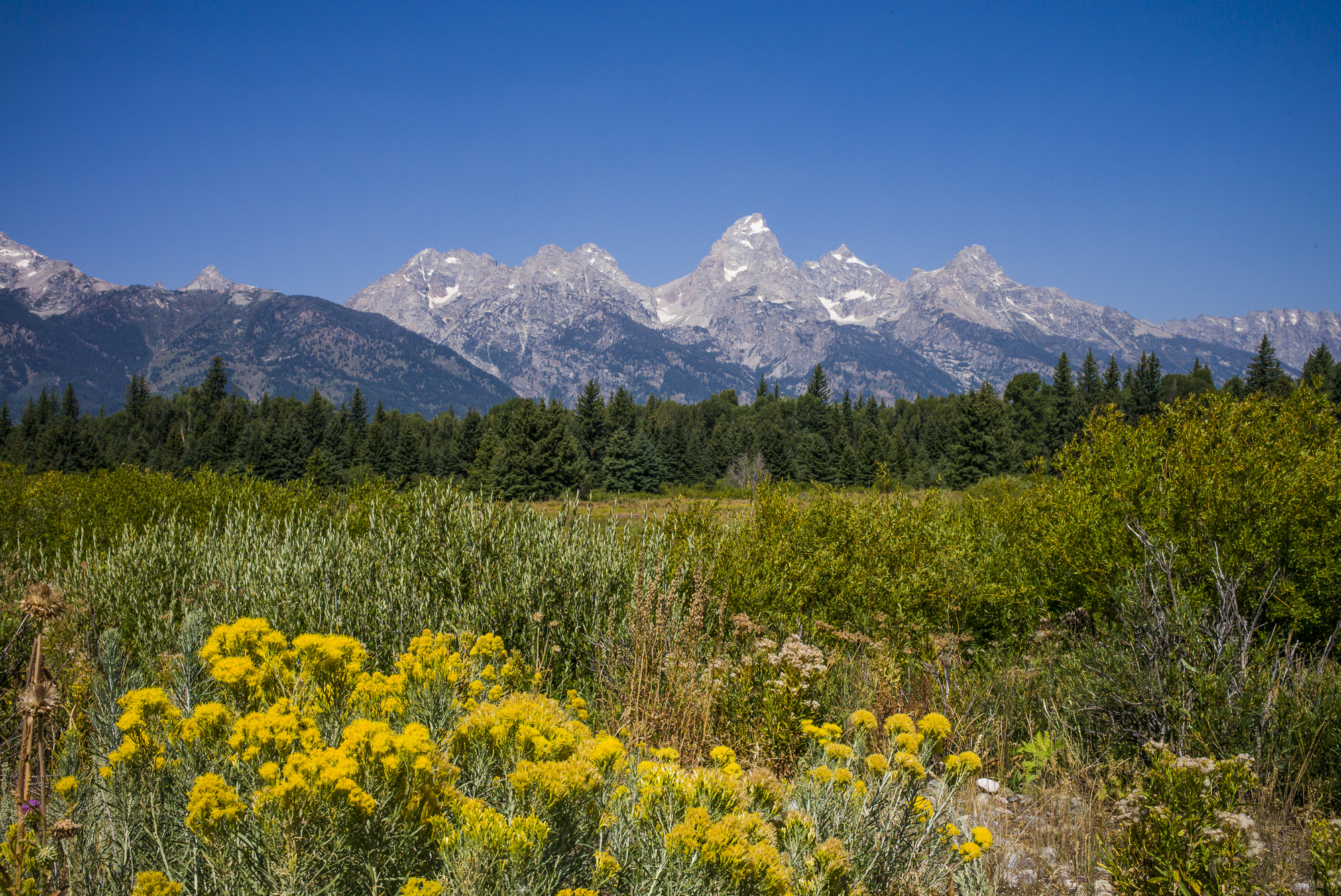 Tetons and Wild Flowers