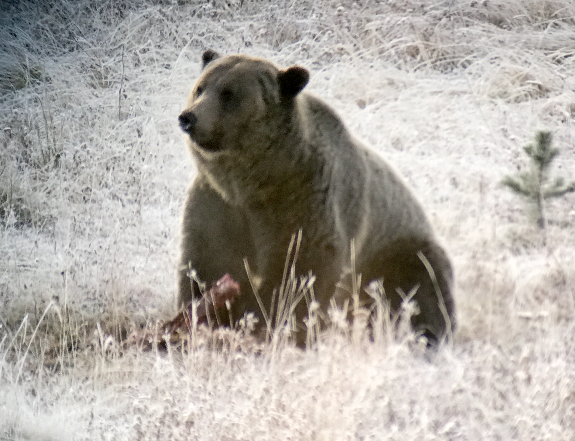 Bears really don't care about much
