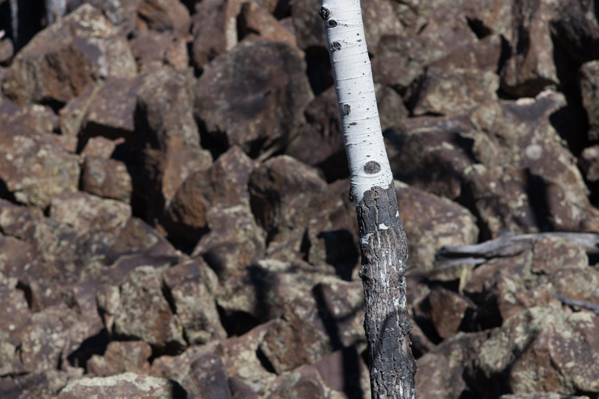 White Aspen with Black Basalt