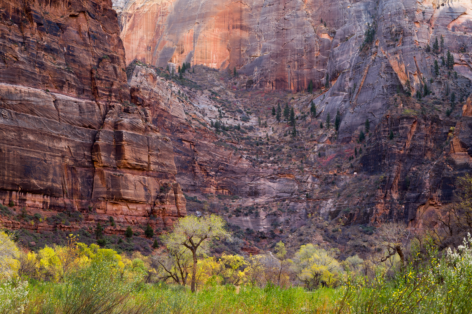 Zion Canyon - Image 1