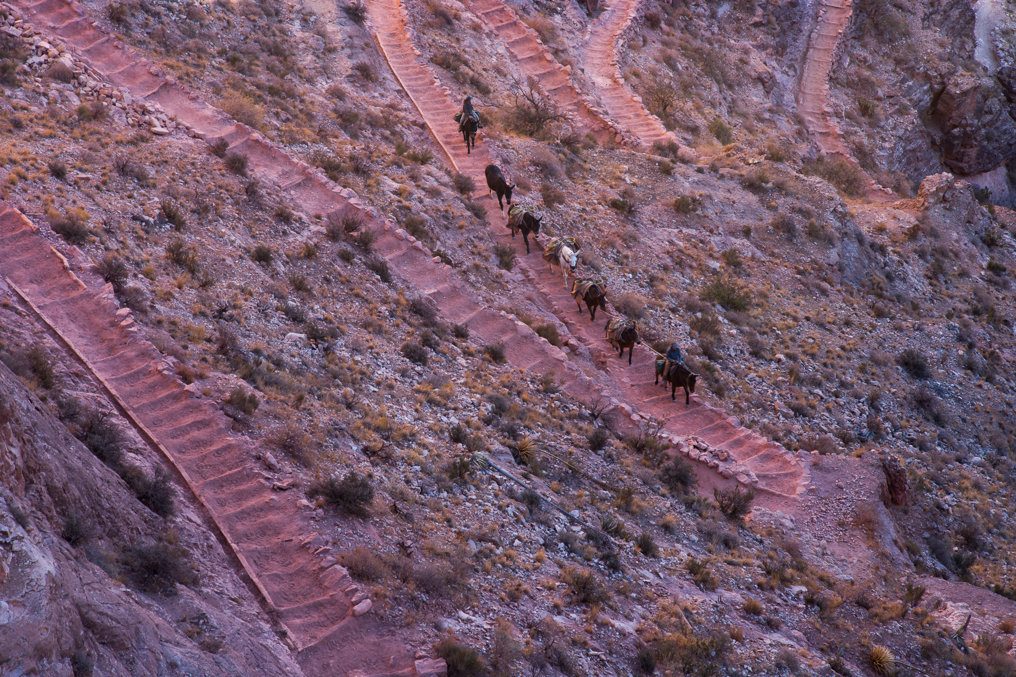 A Mule Team climbing the switchbacks