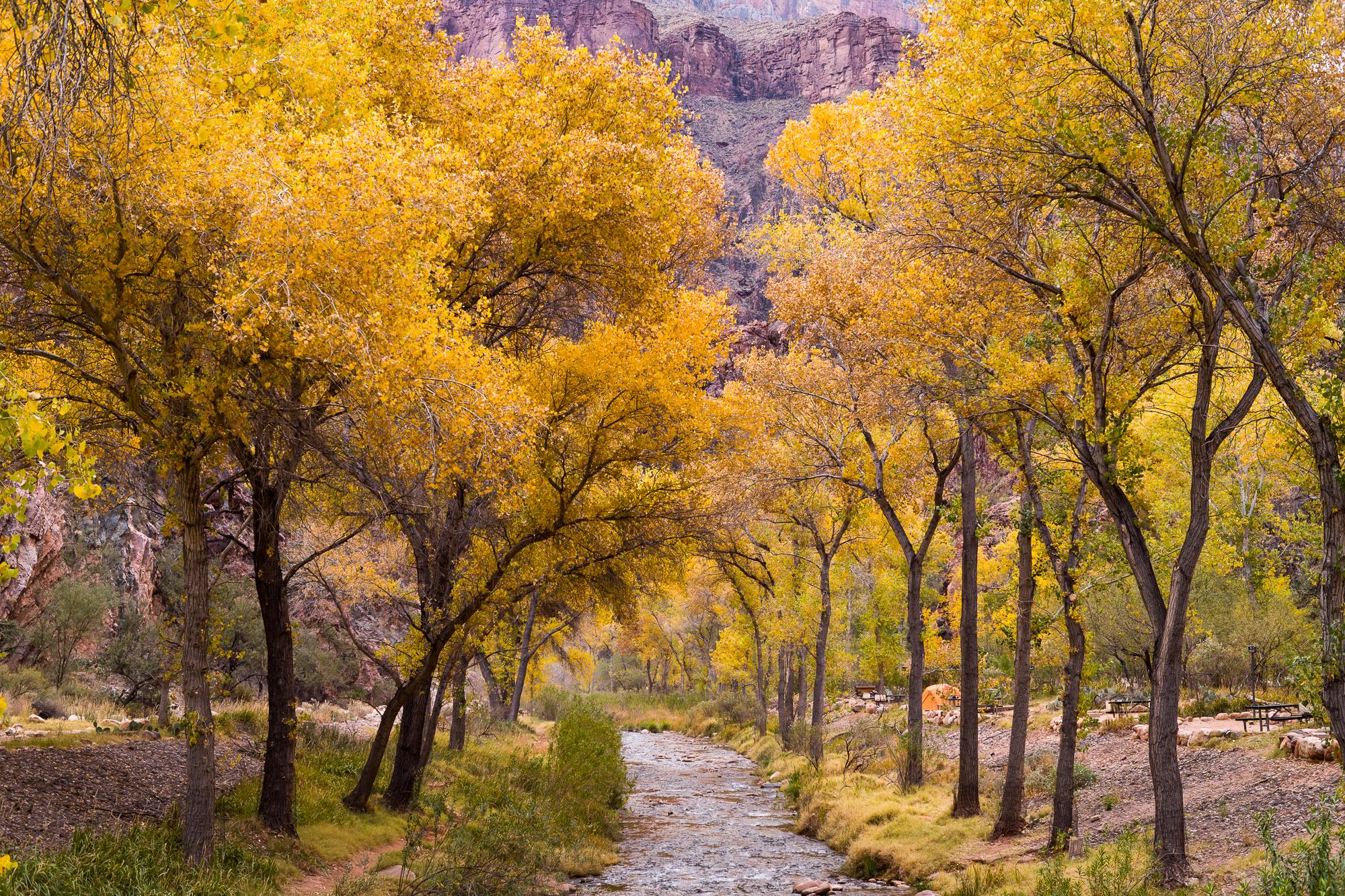 Bright Angel Creek flowing though Phantom Ranch