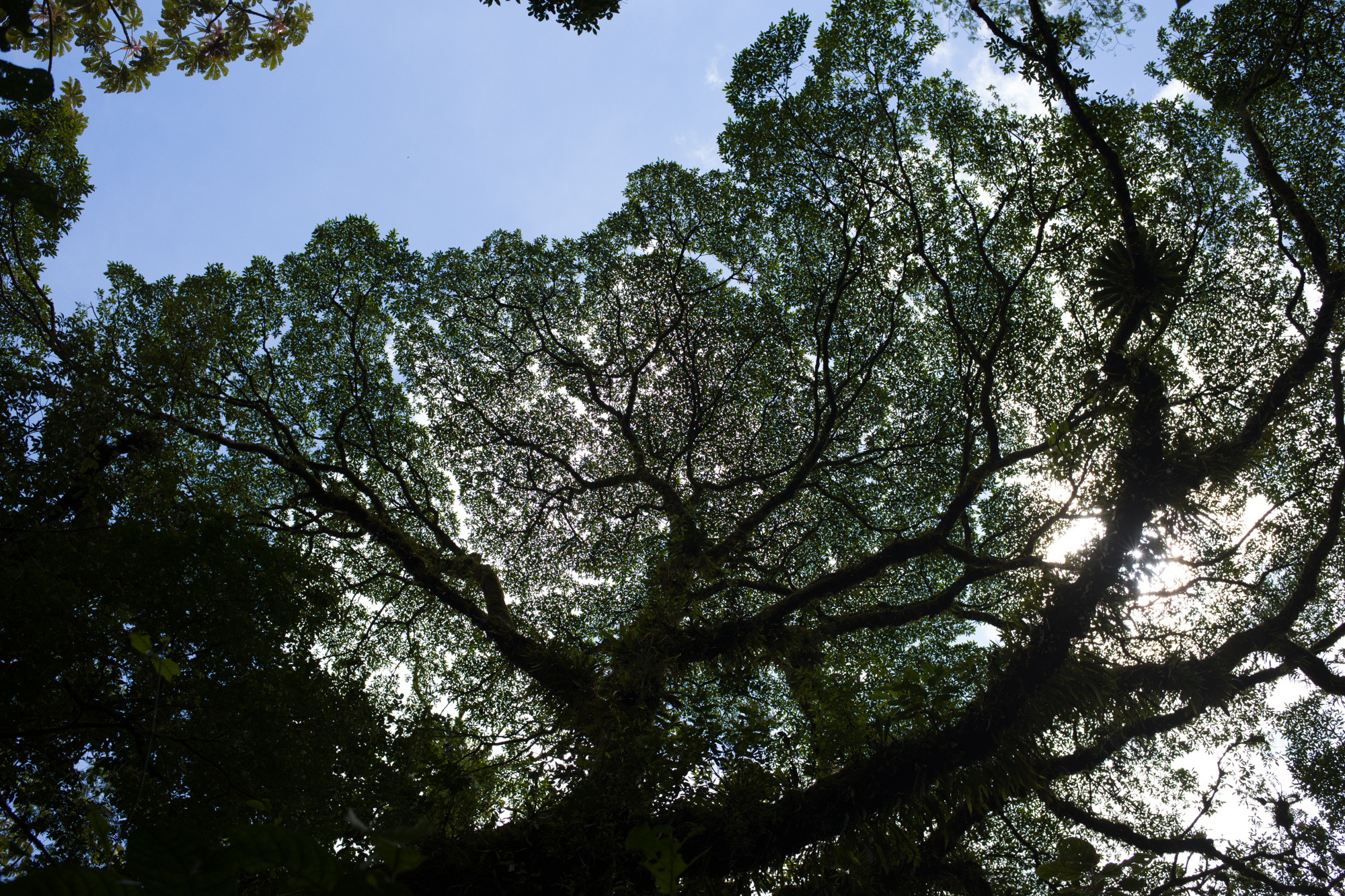 The fractal patterns of the rain forest canopy backlit by the tropical sun