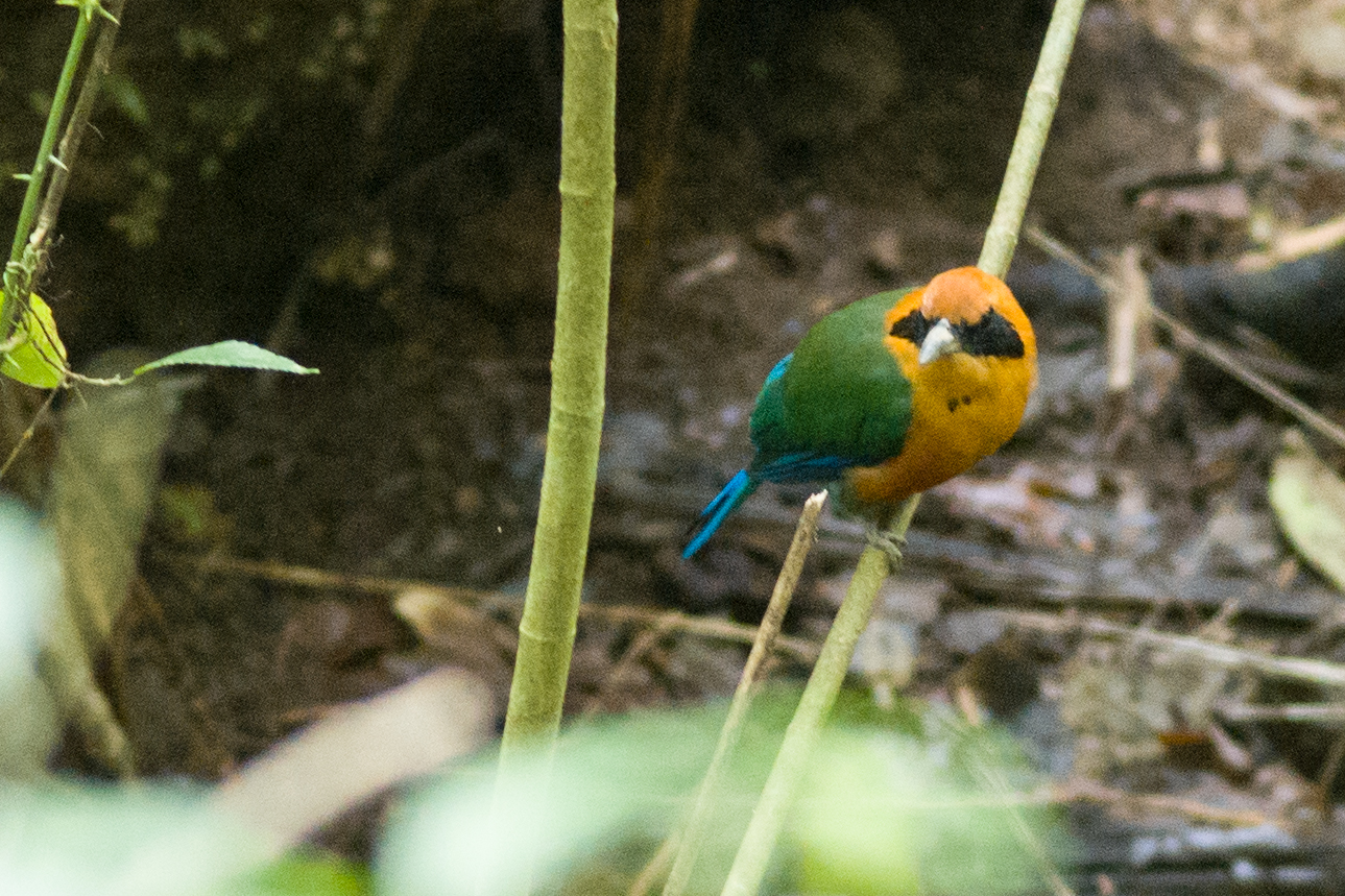 A colorful bird in the rain forest