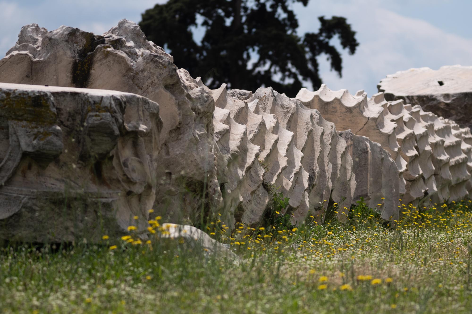 More fallen columns of the Temple of Zeus