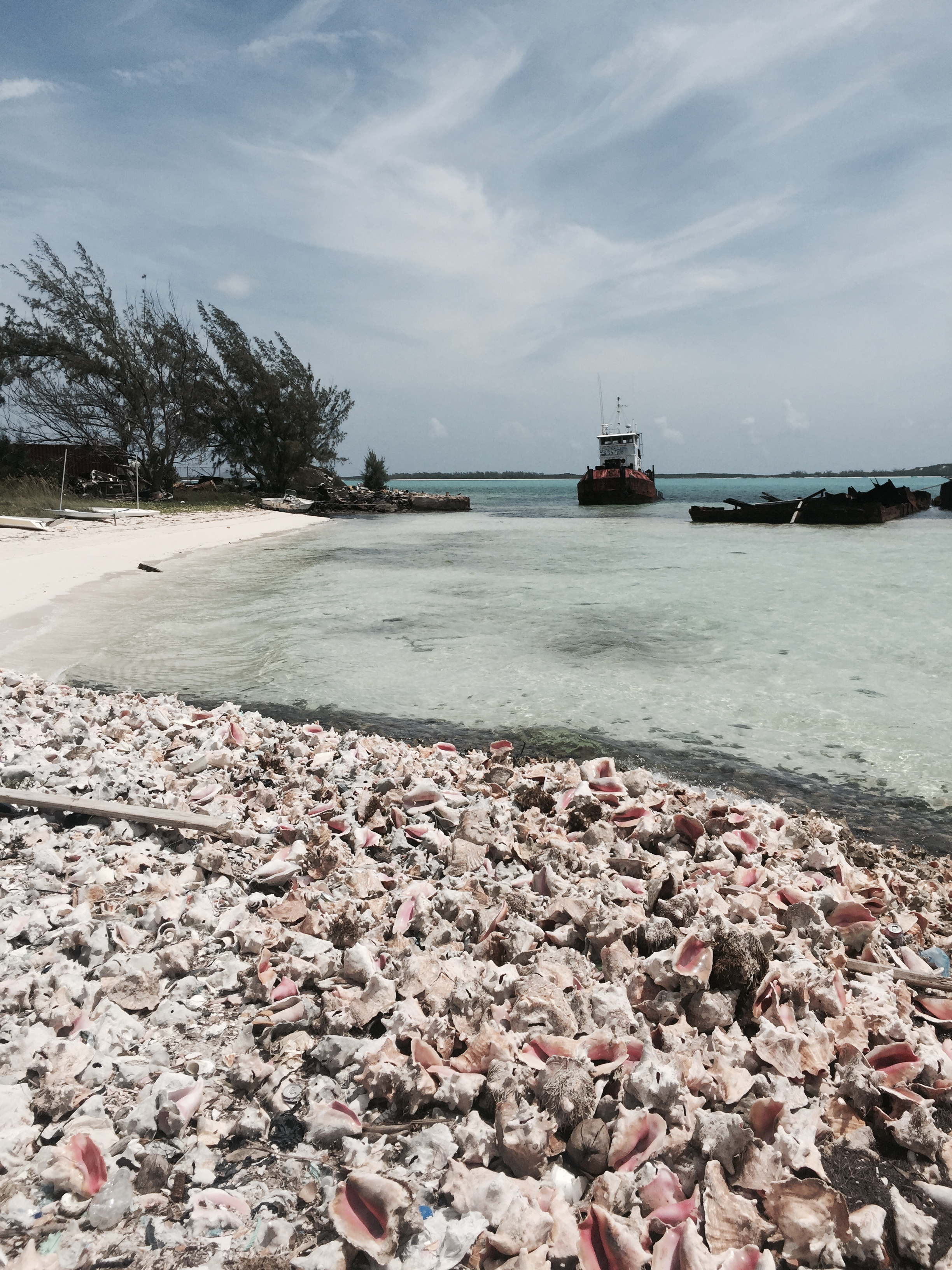 CONCH SHELL BEACH - Right off the Fish Fry town, there is a hidden conch shell beach, the conchs are from the Salad bar thrown into the sea, ultimately leaving behind a gorgeous tide of pink shells for you to go see or take home!Theres also a shipwreck right behind the beach for you to explore.
