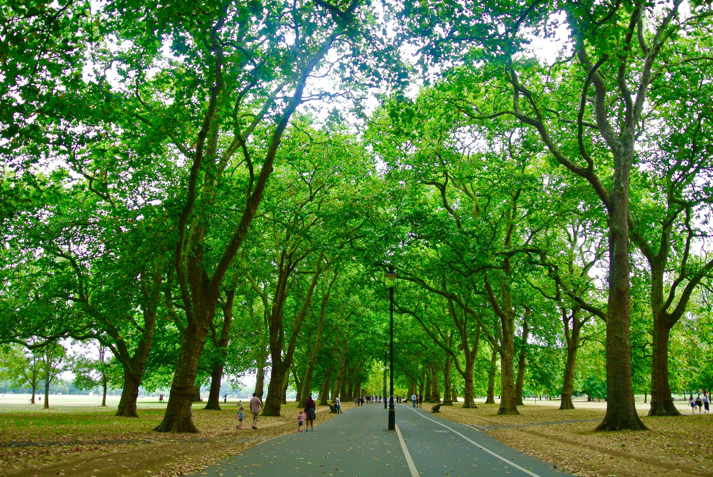 Hyde Park in August
