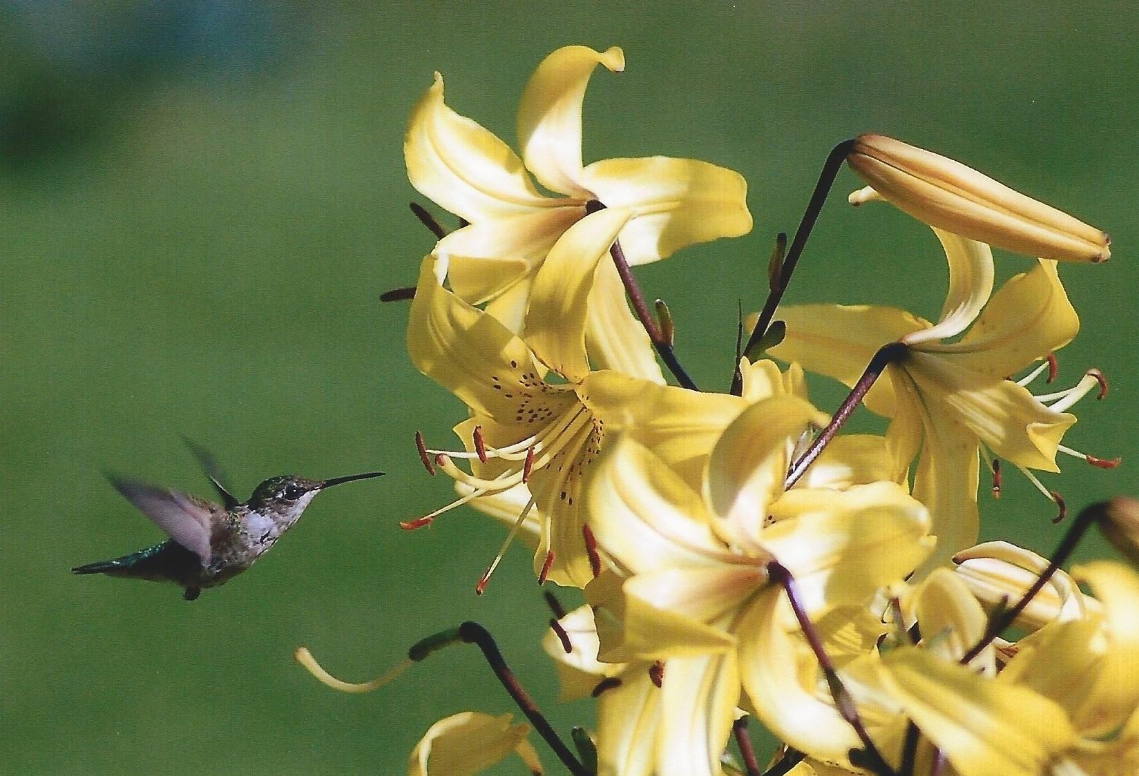 gartner - Knowing where the Nectar is.jpg