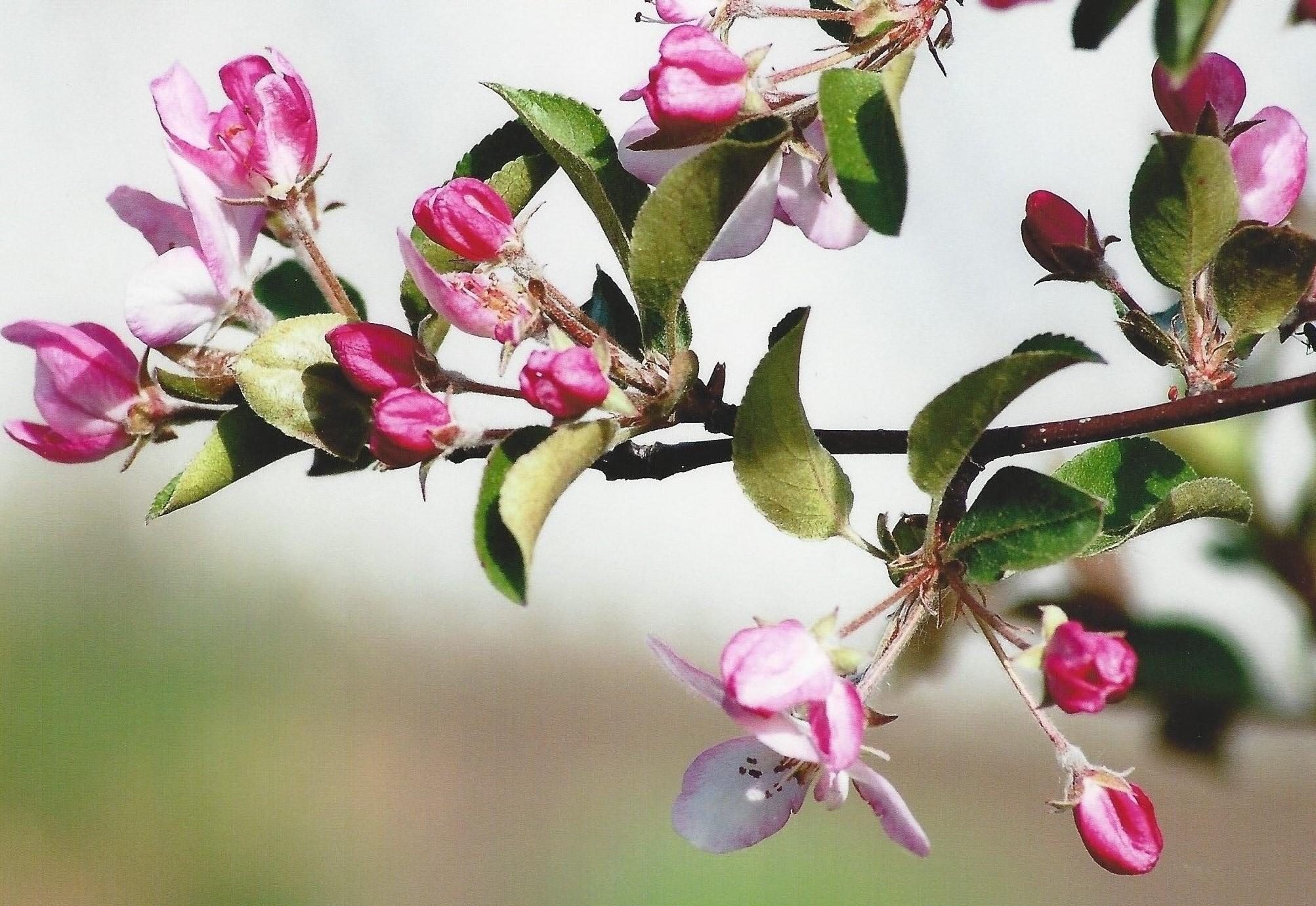 gartner - The Opening Buds of Spring.jpg