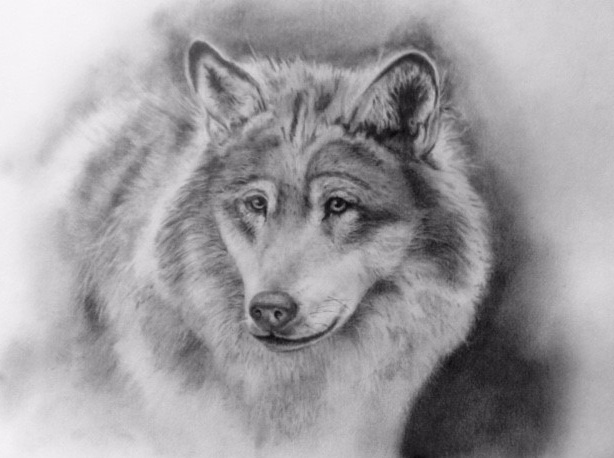valwolf.jpg