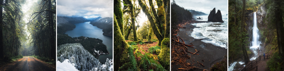 Olympic National Park Banner - Michael Matti.png