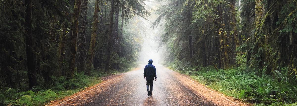 HikeOlympic walking Moody forest roads on the Olympic Peninsula in Washington by Michael Matti.jpg