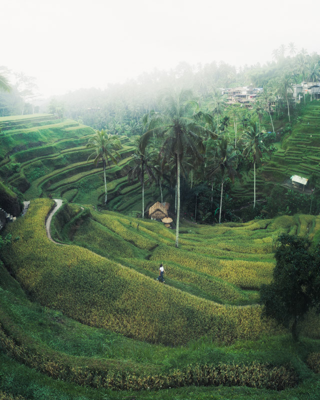 Chelsea at Tegallalang Rice Terraces in Bali Indonesia Drone Pano 3 by Michael Matti.jpg