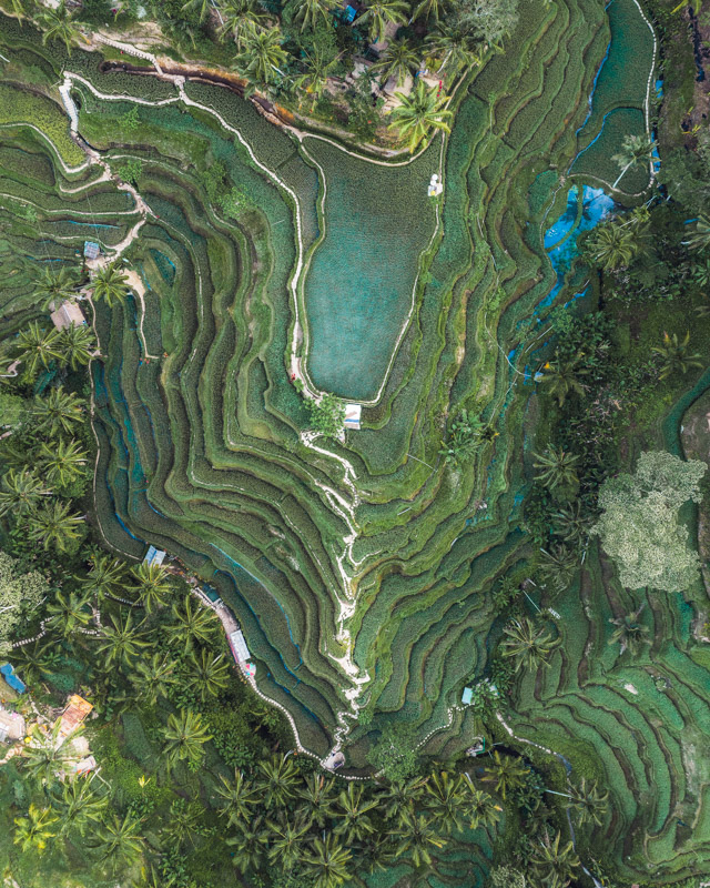 Tegalallang Rice Terraces with a drone by Michael Matti.jpg