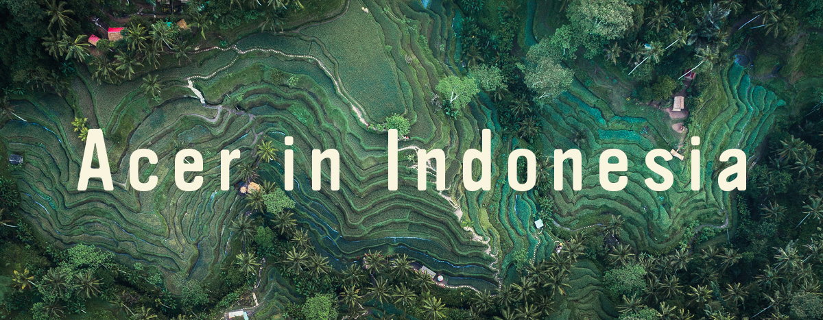 Tegallalang Rice Terraces and Town by drone 2 by Michael Matti copy.jpg