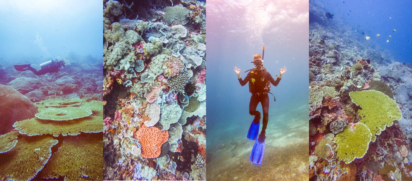 Diving-in-Bali-by-Michael-Matti.jpg