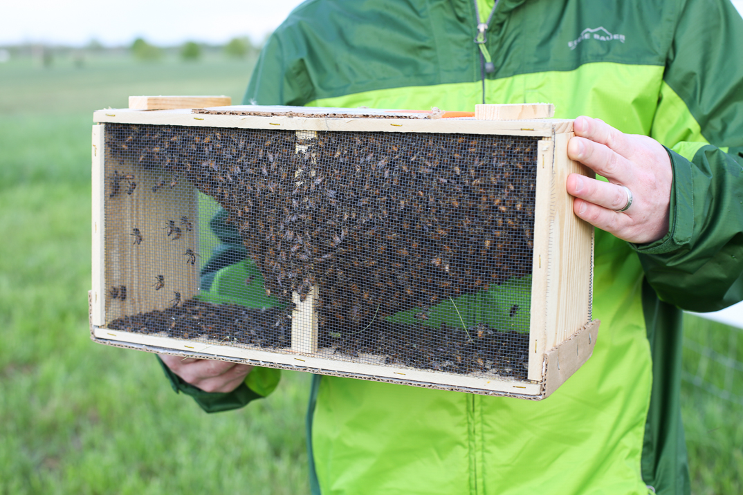 Bees provide practicality to the farm on many levels and inspire us to work a little harder