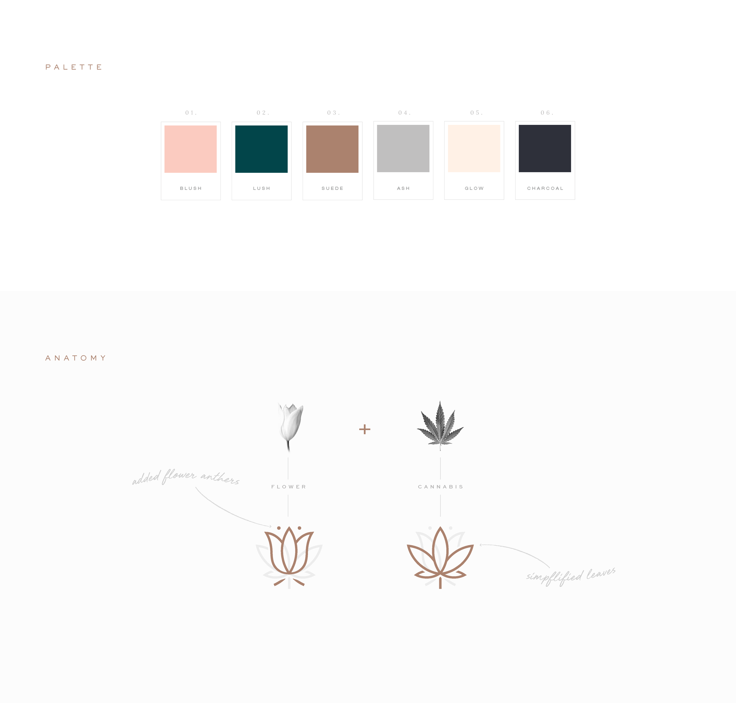 F&F_CaseStudy_Palette & Anatomy.png